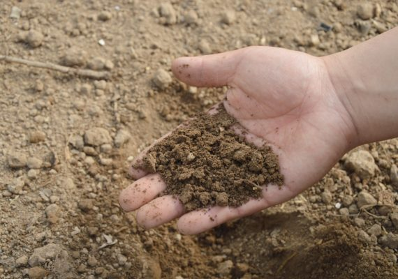 Hand holding dirt